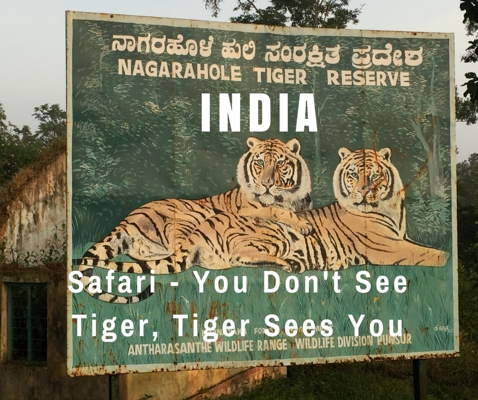 Tiger Safari in Nagarhole National Park – You Don't See Tiger, Tiger Sees You | India