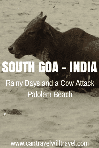 Rainy days and a cow attack - palolem beach, south goa. India. Beach cows