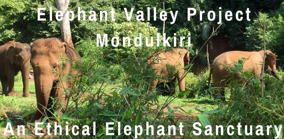 Elephant Valley Project Mondulkiri – An Ethical Elephant Sanctuary | Cambodia