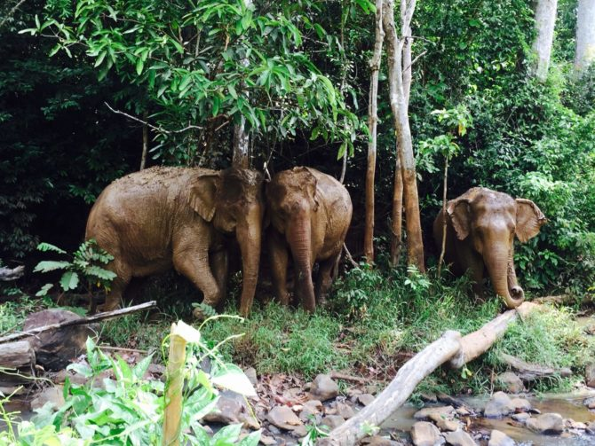 Elephants at Elephant Valley Project in Mondulkiri in Cambodia