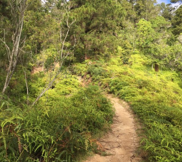 Pico Duarte Hike in the Dominican Republic