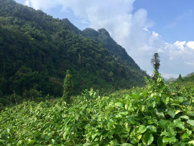 Valley views in Phong Nha-Ke Bang National Park, Vietnam