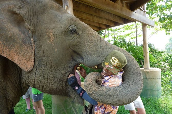 Mahout and Elephant in Thailand
