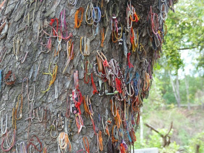 Killing Tree at Choeung Ek Killing Fields in Cambodia