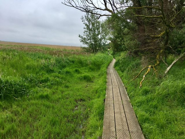 Boardwalk to Brancaster Staithe in Norfolk, England