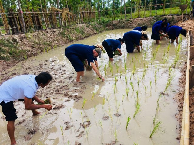 Planting Rice at Khao Kun Mae Organic Farm