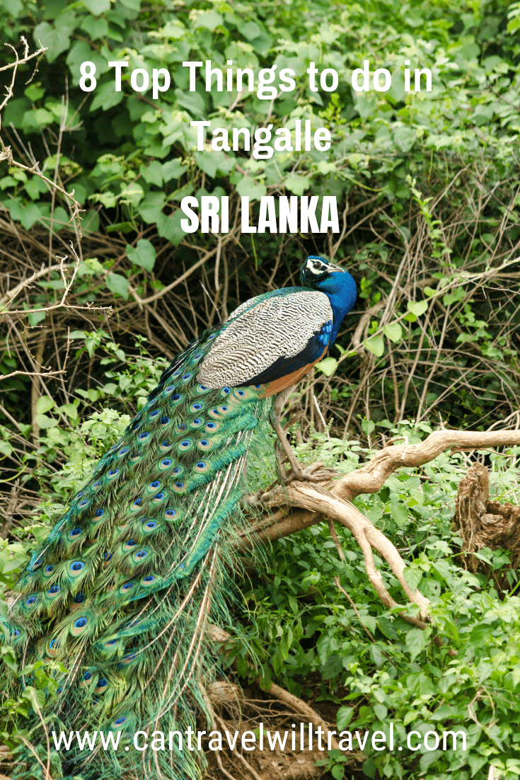 8 Top Things To Do in Sri Lanka Pin 2