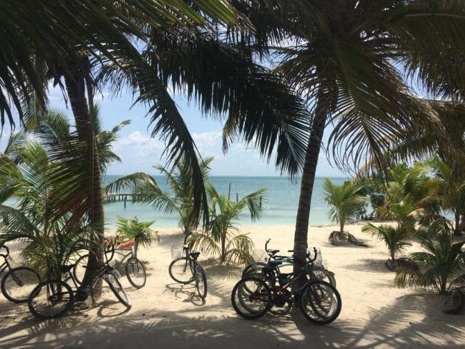 Bicycles on Caye Caulker under palm trees