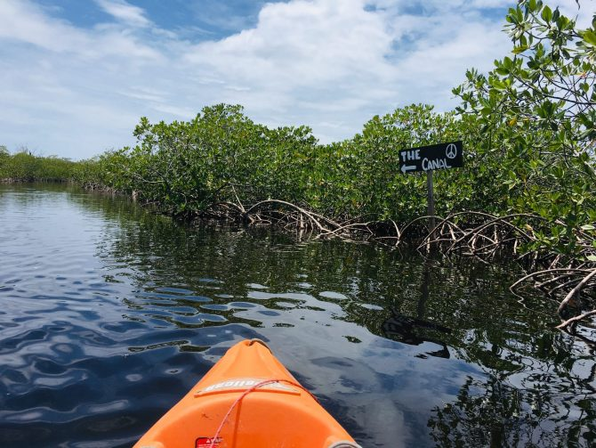Kayak the Mangrove Canal on Utila