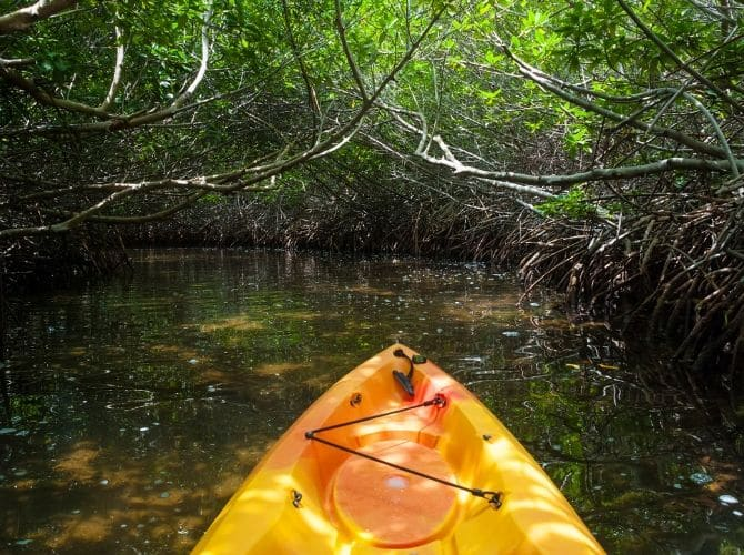 Mangrove kayaking in Placencia, Belize