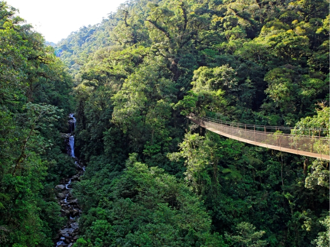 Zipline and Canopy Tour in Boquete